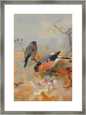 Goldfinches Bullfinches Framed Print by Archibald Thorburn