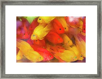 Goldfish At Goldfish Market, Hong Kong Framed Print by Peter Adams