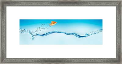 Goldfish Jumping Out Of Water Framed Print