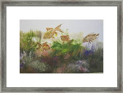 Goldfish Framed Print by Nancy Gorr