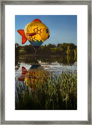 Goldfish Reflection Framed Print