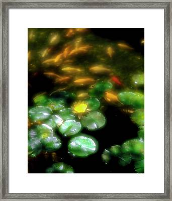 Goldfish Swimming By Lily Pads In Pond Framed Print