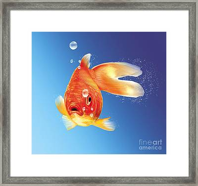Goldfish With Water Bubbles Framed Print