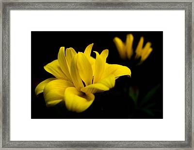 Goldilocks Rocks Framed Print by Penny Meyers