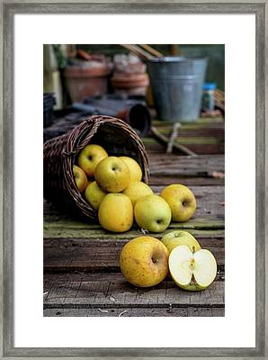 Goldrush Apples Falling From A Basket Framed Print by Aberration Films Ltd