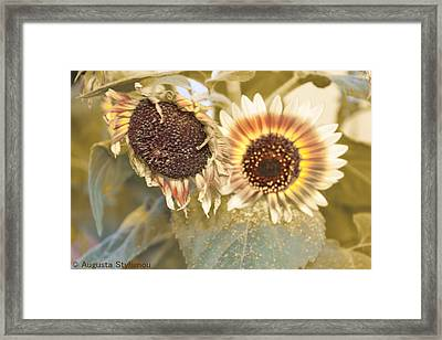 Goldy Sun Flowers Framed Print by Augusta Stylianou