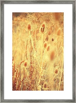 Golgen Shades Of Wild Grass 1 Framed Print by Jenny Rainbow