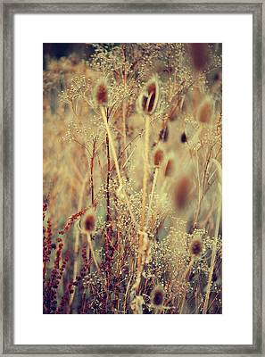 Golgen Shades Of Wild Grass Framed Print