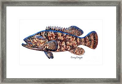 Goliath Grouper Framed Print by Carey Chen