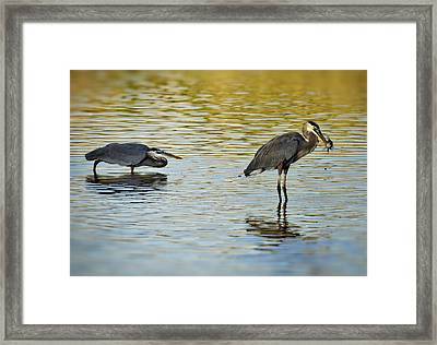 Gone Fishin' Framed Print by Saija  Lehtonen