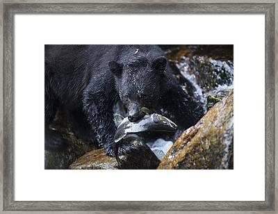Gone Fishing Framed Print by Bill Cubitt