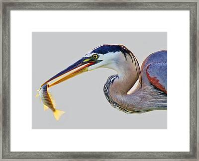 Gone Fishing Framed Print by Paulette Thomas