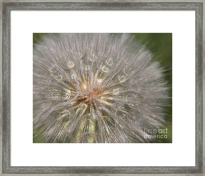 Gone To Seed Framed Print by Marty Fancy