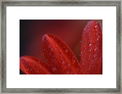 Framed Print featuring the photograph Gone Too Soon by Melanie Moraga