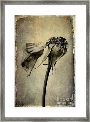 Gone With The Wind Framed Print by Elena Nosyreva