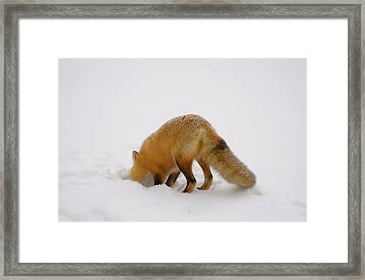 Framed Print featuring the photograph Gonna Get It by Sandra Updyke