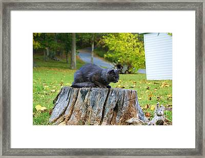 Framed Print featuring the photograph Gonna Gitcha by Julie Clements