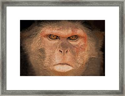 Goo Framed Print by Marion Johnson