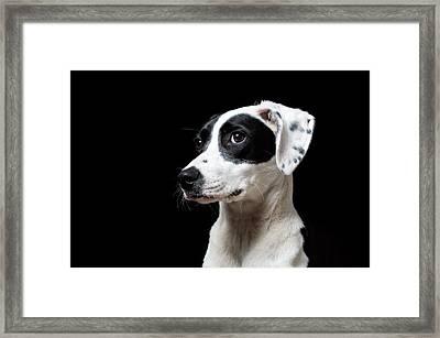 Good Boy Framed Print by Trevor Wintle