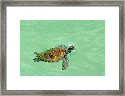 Framed Print featuring the photograph Good Day For A Swim  by Susan  McMenamin