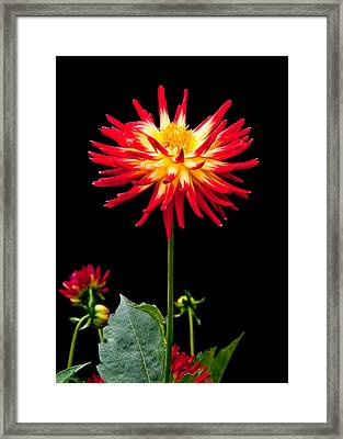 Good Day Framed Print