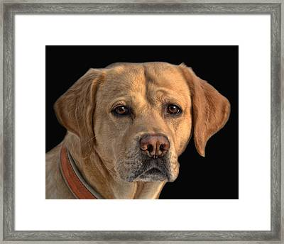 Good Fellow Framed Print by Joachim G Pinkawa