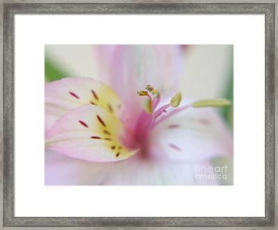 Good Fortune In Pastel Framed Print by Irina Wardas