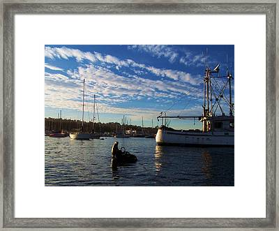 Good Lookin Out Framed Print