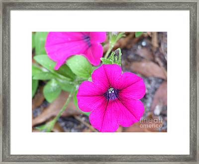 Framed Print featuring the photograph Good Morning by Andrea Anderegg