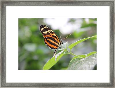 Good Morning Butterfly Framed Print by Jackie Mestrom