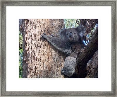 Good Morning Framed Print by Evelyn Tambour