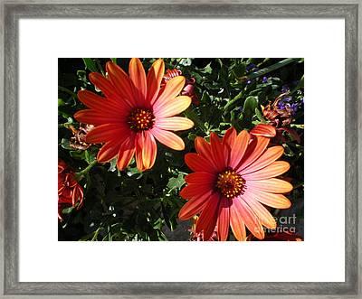Good Morning Flower. Framed Print by Ann Fellows