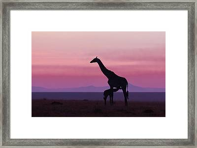 Good Morning Masai Mara 7 Framed Print