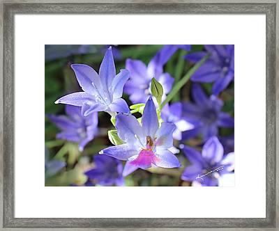 Good Morning My Fairy Framed Print