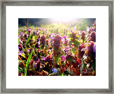 Good Morning Framed Print by Nina Ficur Feenan