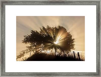 Good Morning Framed Print