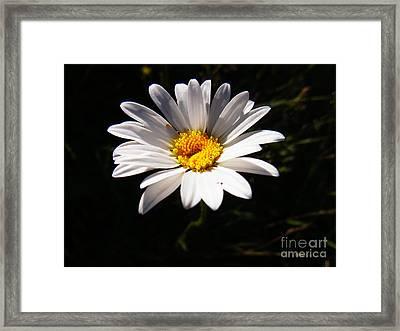 Good Morning Sunshine Framed Print by Agnieszka Ledwon