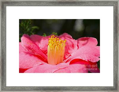 Good Morning Sunshine Framed Print by Nur Roy
