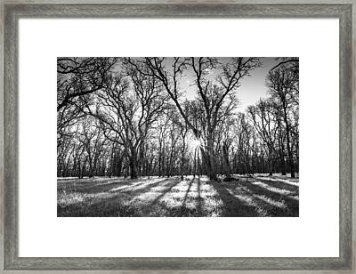 Good Morning Sunshine Framed Print by Randy Wood