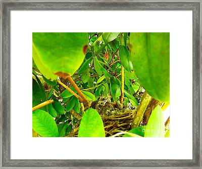 Good Morning Sunshine Framed Print by Robyn King