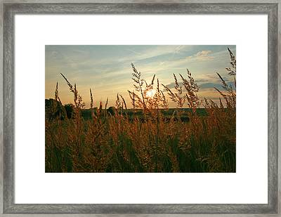 Good Morning Sunshine Framed Print by Shirley Heier