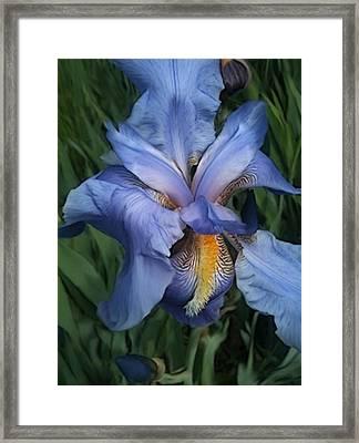 Good Neighbors Blue Flowers Framed Print