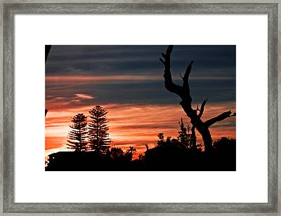 Framed Print featuring the photograph Good Night Trees by Miroslava Jurcik