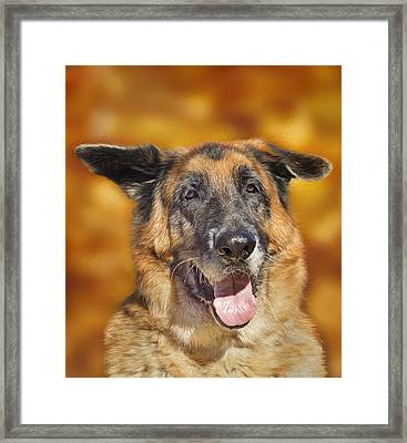Framed Print featuring the photograph Good Old Boy by Brian Cross