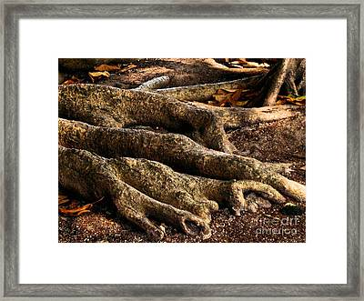 Good Roots Framed Print by Claudette Bujold-Poirier