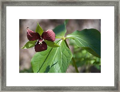 Good Things Come In Threes Framed Print