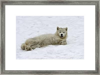 Good Wolfie ... Framed Print