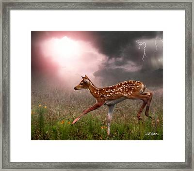 Goodbye Bambi Framed Print by Bill Stephens