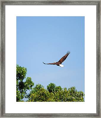 Goodbye Framed Print by Jai Johnson