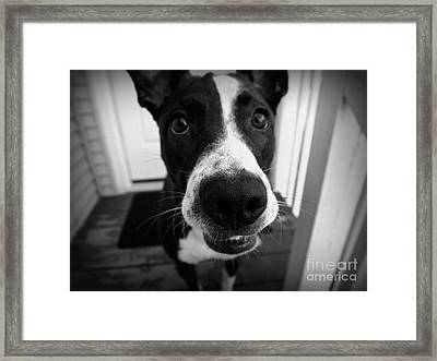 Goof Ball Framed Print